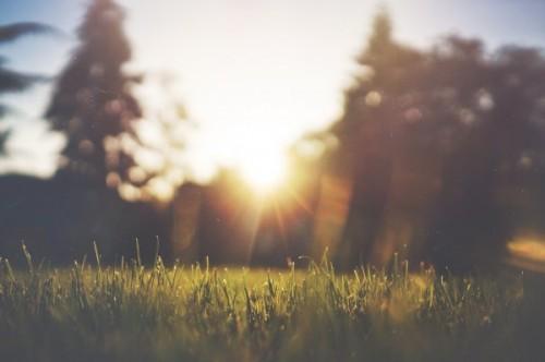 jardin soleil été
