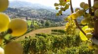Achat-domaine-viticole