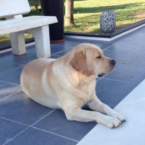 gardiennage de chien