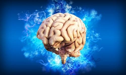 Le cerveau, le super-organe par excellence