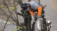 elagage arbre (1)