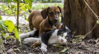 vermifuge-chien-chat