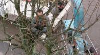 Élagage-arbre