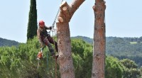 elagage-arbre